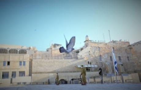 'אור מירושלים' מאת אפרת בזק | ליום הזיכרון לחללי מערכות ישראל ונפגעי פעולות האיבה