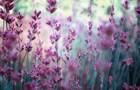 שושי גבאי – סדנת פרחי באך 15