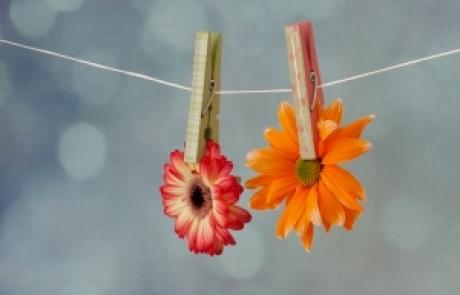 שושי גבאי – סדנת פרחי באך 13