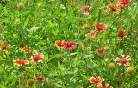 שושי גבאי – סדנת פרחי באך 9      2.8.11