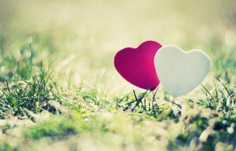 אהבה זה כל הסיפור | דפנה עבדי