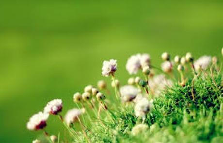 שושי גבאי – סדנת פרחי באך 3