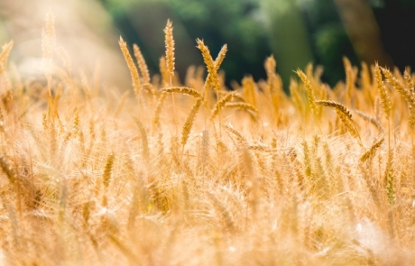 הרב צבי דוד שוורץ – דיני ספירת העומר