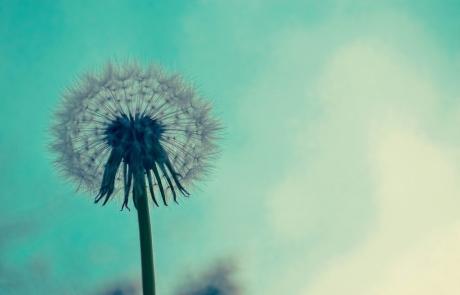 תמימים לפרשת חיי שרה | רחל וינשטיין