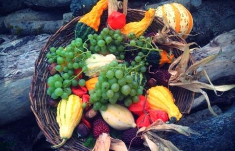 כמה עובדות על פירות הקיץ | חגית אוחיון
