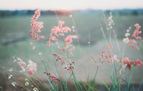 הכנה רוחנית לחודש אלול וימי התשובה – חלק ראשון | הר' יעל חדוה לוריא