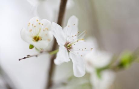 שושי גבאי – סדנת פרחי באך 4