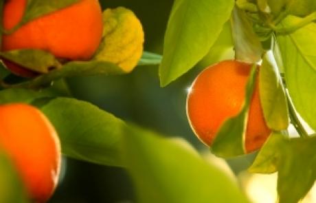 טיפים תזונתיים לצום יום כיפור | מיטל דדוש