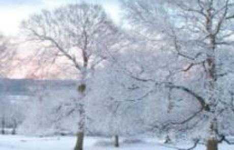 מדריך: איך לשמור על בריאות הוריך בחורף / חדוה שטרנברג, הומאופטית
